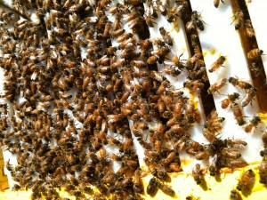Repopulated Hive