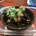 sad_cactus